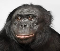 bonob